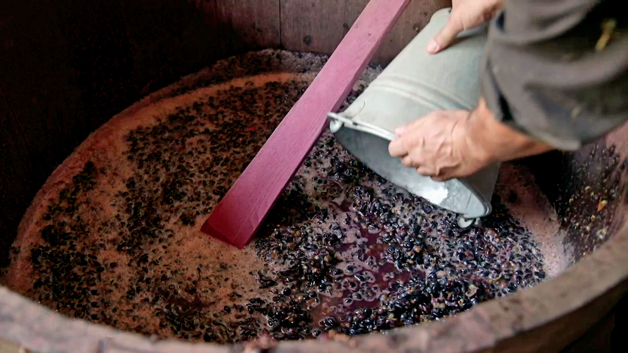 wine-handmade-in-austria-grapes-and-vibes